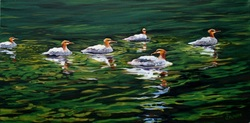 painting of Mergansers
