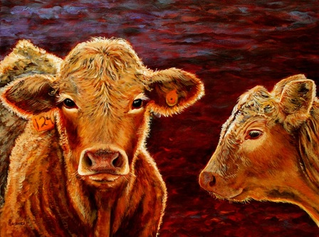 painting of charolias cross calves